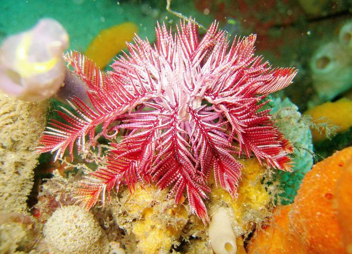 Биологи раскрыли секрет выживания древних морских лилий