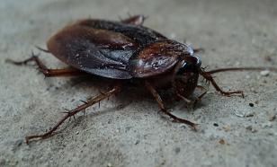 Инженеры из Сингапура разработали тараканов-разведчиков