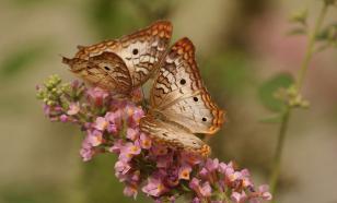 Российский энтомолог открыл новых насекомых в японской коллекции