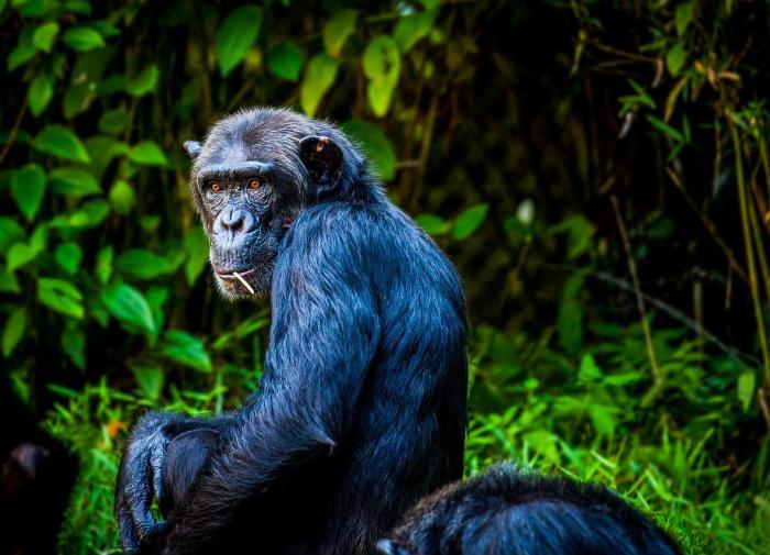 Взаимодействие с другими видами делает животных умнее