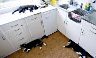 Кошки прожили два года в закрытой квартире после смерти хозяйки