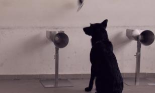 """В Ливане учат собак """"вынюхивать"""" коронавирус в аэропортах"""