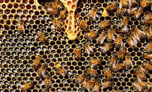 Древние африканцы добывали мёд ещё 3500 лет назад