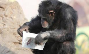 Учёные выяснили, как мозг приматов обучился чтению