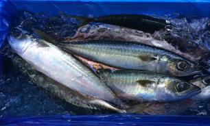 Электронные аукционы вредят рыболовной отрасли и федеральному бюджету - эксперты