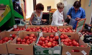 Правительство запретило аграриям выращивать ГМО-сорта