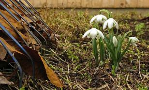 Как привести в порядок сад в апреле?
