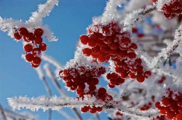 """Декабрь в России точно будет """"вишневым"""", обещают синоптики"""