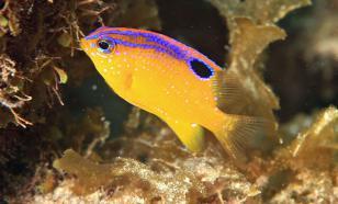 Рыбы могут заводить себе домашних животных