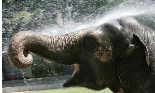 Жители Магнитогорска нашли в черте города... пастбище слонов