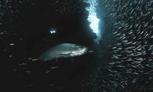 Почему в России не ловят тунца
