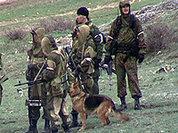 В лесу Дагестана убит еще один боевик