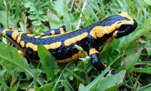 В Киргизии обнаружили останки саламандры возрастом 230 млн лет