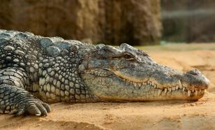 Палеонтологи обнаружили крокодилов, ходивших на двух лапах