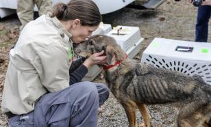 Владимир Бурматов: бездомных животных быть не должно
