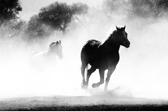 Раскрыта тайна легендарных скифских лошадей