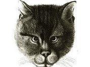Кошка помогла раскрыть вероломное убийство