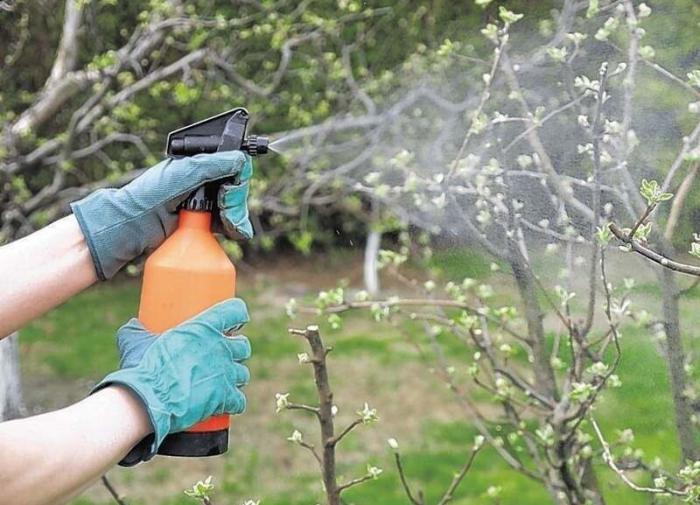 Когда и чем опрыскивать плодовые деревья весной?