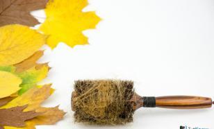 Осенний волосопад: причины сезонного выпадения волос