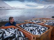 Рыбу очистят от взяток и подлогов
