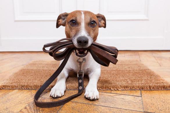 Чем заняться с собакой на самоизоляции