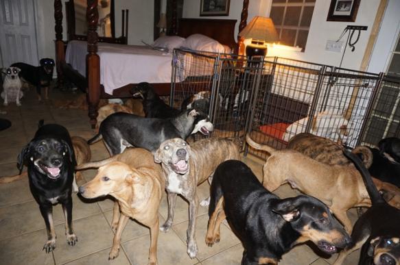 """Жительница Нассау спасла от урагана """"Дориан"""" почти 100 собак"""