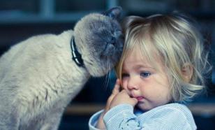 """Аллергия на кошек вызвана их """"защитным оружием"""""""