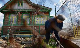 Из-за пандемии COVID-19 россияне начали скупать товары для дачи