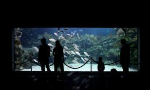Крупнейший в Южной Америке океанариум открылся после пандемии