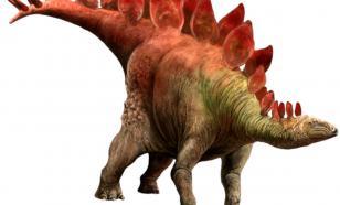 В Китае обнаружили след крошечного стегозавра