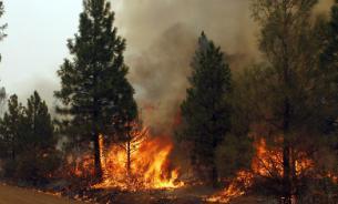Пожары в Сибири: кто виноват и что делать