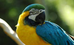 Мозг птиц сильно увеличился после мел-палеогенового вымирания