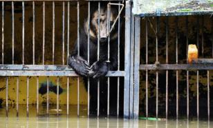 В Сочи маленький мальчик погиб в вольере с медведями