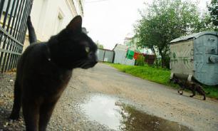 Кот из Сибири стал мировой звездой, съев кусочек мяса