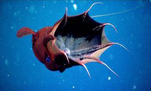 В Мексиканском заливе обнаружили странного глубоководного моллюска