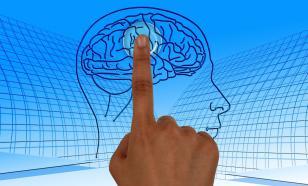Учёные обнаружили участок мозга, отвечающий за мотивацию