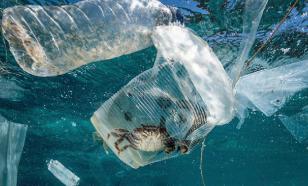 В Японии создали биоразлагаемый пластик на основе растений