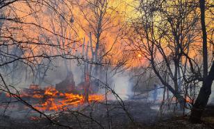 В Чернобыльской зоне отчуждения третьи сутки горит лес