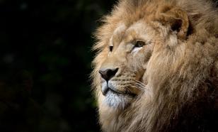 Как спланировать сафари в Африку