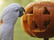 Хэллоуин: какая тыква укусила чиновников?
