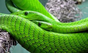 Новый вид змеи назван в честь персонажа из вселенной Гарри Поттера