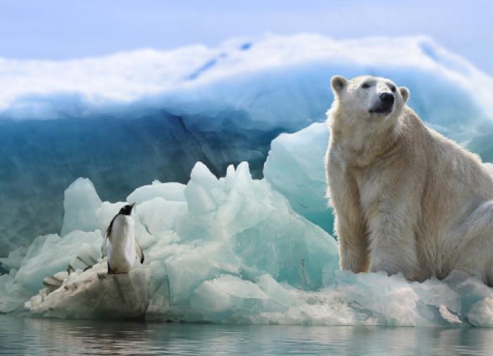 Зоологи предупреждают: белые медведи могут исчезнуть к 2100 году