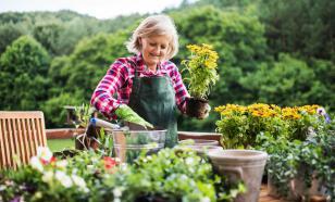 Почему в пандемию популярны спорт, выпечка и садоводство