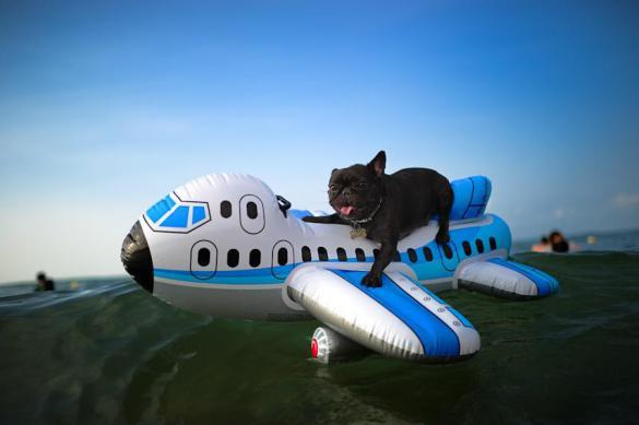Правила перелета животных в самолете