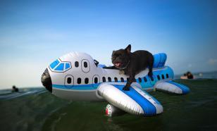 Как собаки перелетают границу