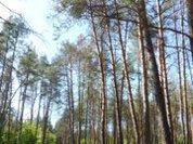 Для изучения лесов запустят спутник