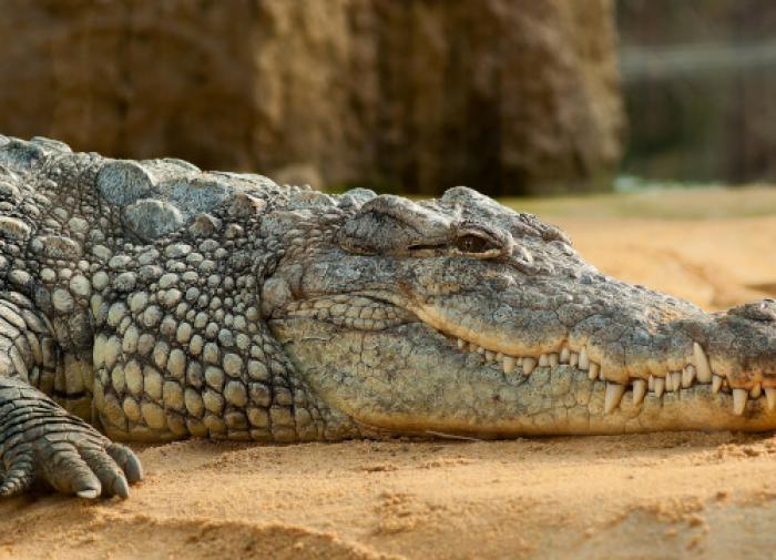"""""""Гоша мёрзнет"""": вологжанин ради своего крокодила хотел уехать в Сочи"""