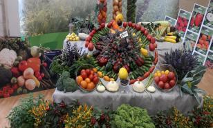 Перец сладкий и очень горькие патиссоны: ВНИИССОК отмечает 100-летний юбилей