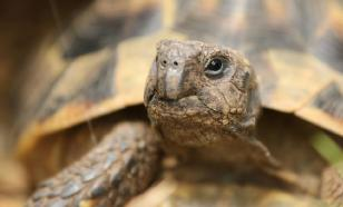 Британские пожарные спасли на Рождество черепаху-поджигательницу