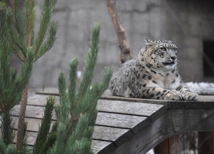 Жителей Санкт-Петербурга приглашают в зоопарк